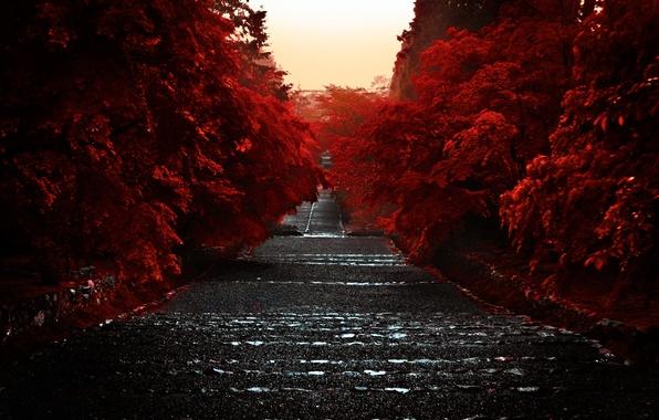 Picture Japan, Japan, Kyoto, Kyoto, The Kansai Region, Kyoto Prefecture, The Island Of Honshu, 近畿地方, The …