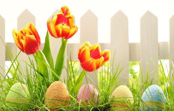 Picture grass, flowers, nature, holiday, the fence, eggs, spring, Easter, tulips, Easter
