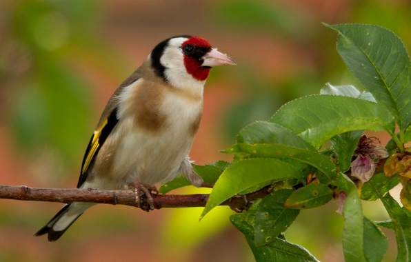 Picture leaves, bird, branch, goldfinch