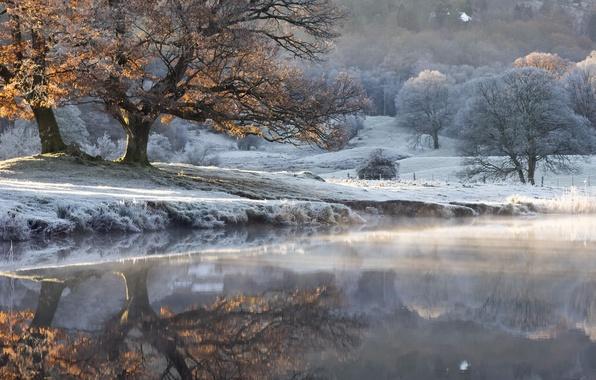 Picture autumn, fog, lake, tree