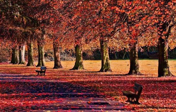 Picture autumn, leaves, trees, nature, background, widescreen, Wallpaper, shop, track, shop, wallpaper, falling leaves, benches, path, …