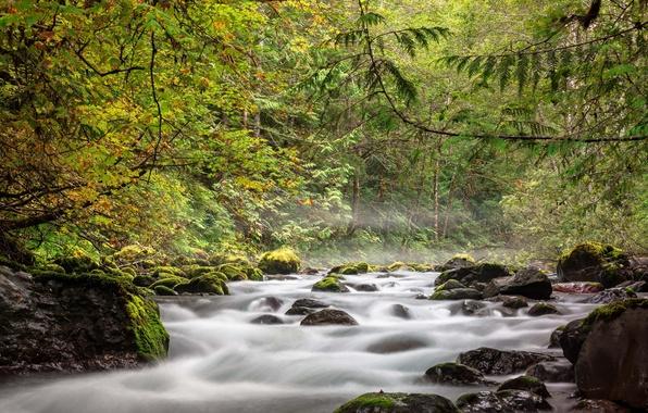 Picture autumn, forest, river, stones, stream
