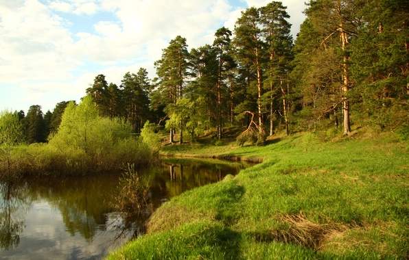Picture forest, landscape, nature, river, stay, Wallpaper, walk, Cava