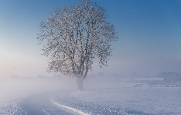 Picture winter, road, snow, fog, tree, morning, frosty