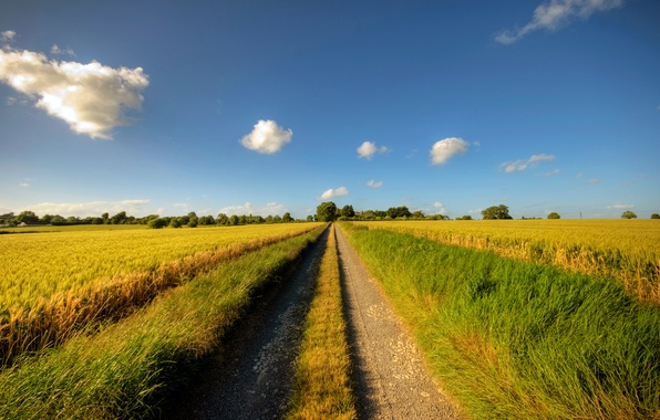 Picture road, summer, the sky, clouds, the way, dal, grass, road, grains, Sunny day