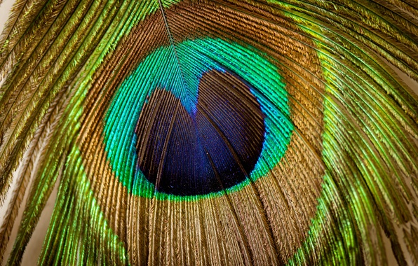 Picture patterns, beautiful, texture, peacock feathers