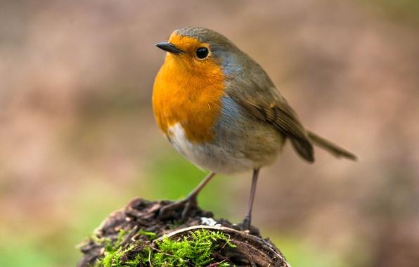 Picture bird, moss, stump