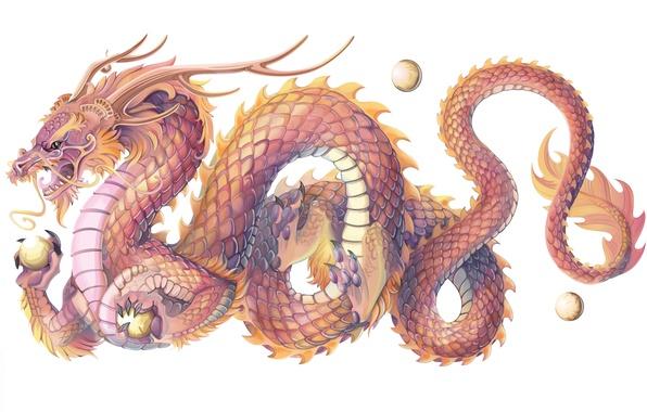 Picture dragon, scales, symbol