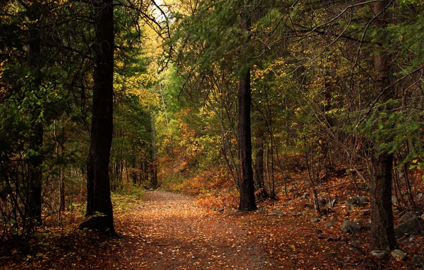 Picture autumn, forest, leaves, trees, Park, the way, stones, sunlight