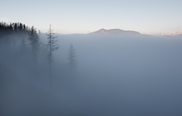 Picture trees, mountains, fog