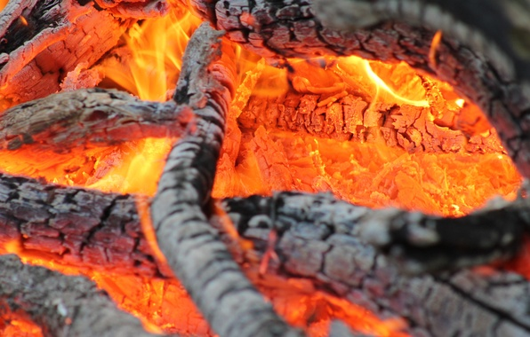 Picture fire, wood, heat, combustion, firewood, coals