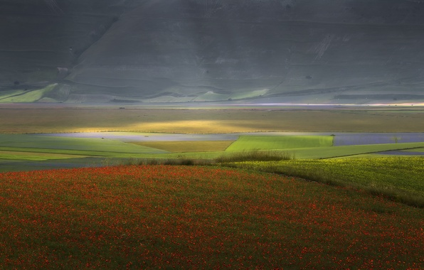 Picture landscape, flowers, nature, field, Maki