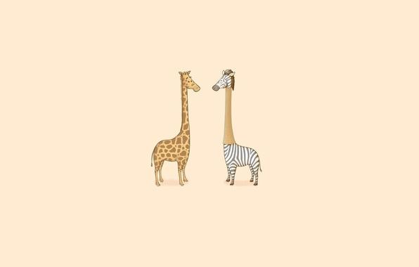 Picture Minimalism, Humor, Giraffe, Zebra, Art