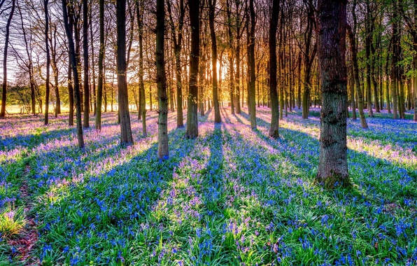 Picture forest, the sun, rays, trees, flowers, shadow, bells