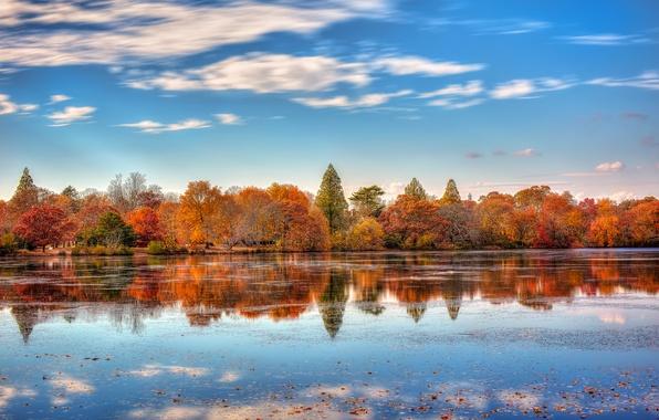 Picture autumn, reflection, the city, lake, New York, USA, November, Belmont Lake State Park