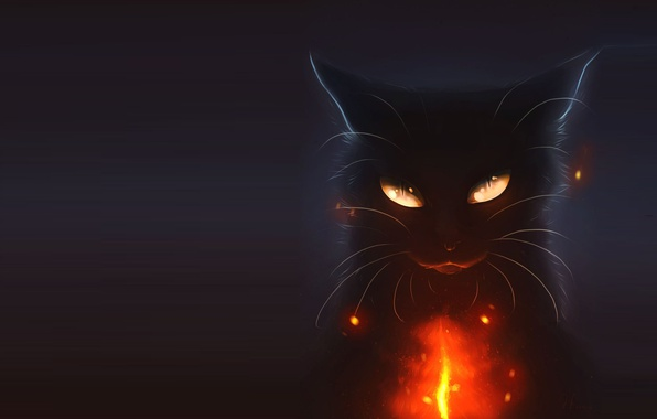 wallpaper cat  night  holiday  art  halloween images for