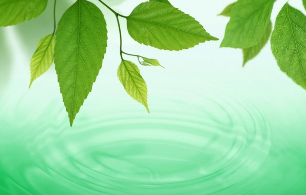 Picture water, macro, circles, background, green, widescreen, Wallpaper, Leaves, wallpaper, widescreen, water, background, spring, full screen, …