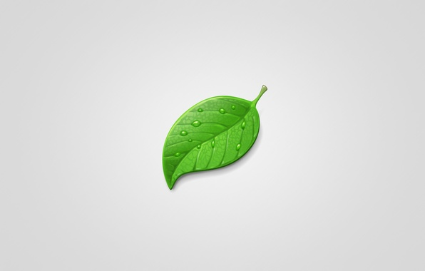 Picture drops, sheet, green, green, minimalism, light background, leaf