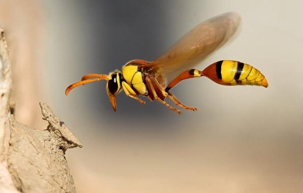 Picture macro, flight, Bee