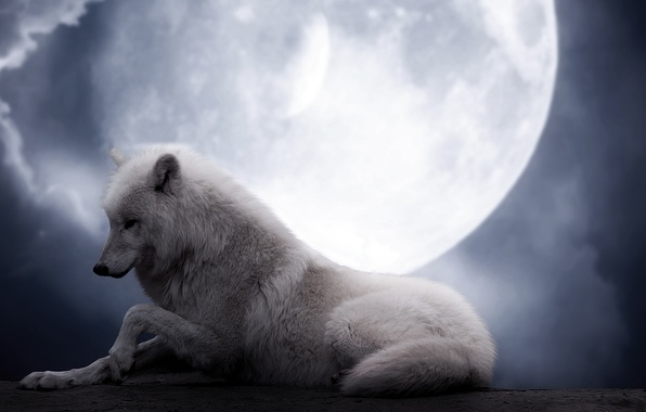 Picture white, night, background, fiction, the moon, wolf, beauty, wolf