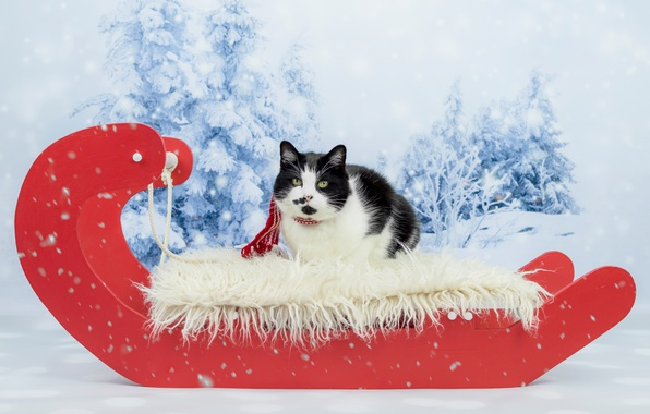 Picture winter, forest, cat, cat, look, snow, red, black and white, new year, portrait, Christmas, ate, …