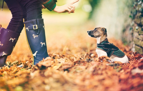 Picture autumn, leaves, dog, bokeh, little friend