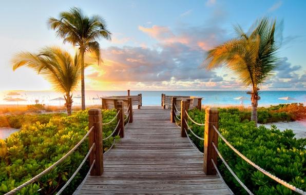 Picture sea, greens, the sun, bridge, palm trees, Caribbean