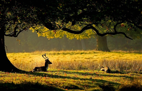 Picture grass, leaves, the sun, nature, tree, deer, horns, deer, cub