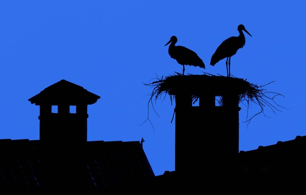 Picture roof, the sky, the city, Wallpaper, silhouette, socket, stork, tile, fireplace, smoker