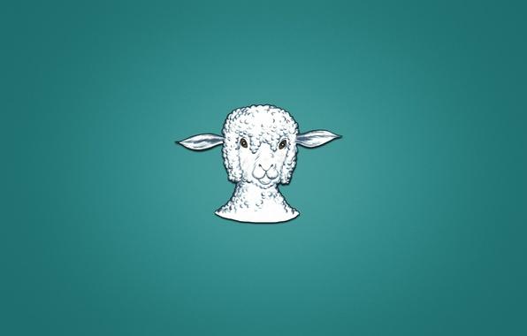 Picture animal, minimalism, head, lamb, sheep, sheep, bluish background