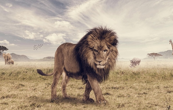 Picture animal, elephant, Leo, giraffe, Savannah, Rhino, photoshop, The Lion King, Animal, Joshua Stretched