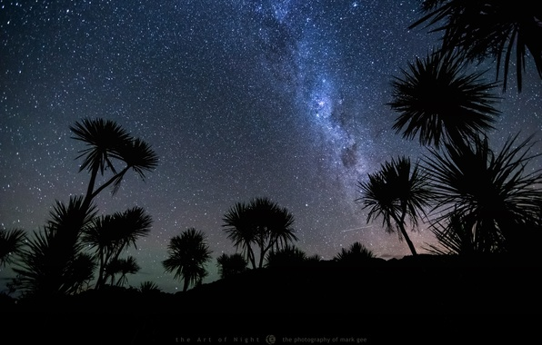 Picture the sky, stars, night, palm trees, meteor, photographer, Mark Gee
