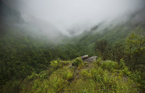 Picture forest, mountains, fog, gorge