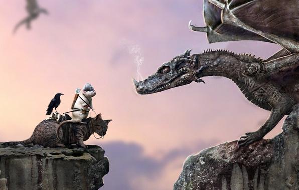 Picture cat, rock, open, dragon, humor, helmet, rider, Raven, arrows, rat, top