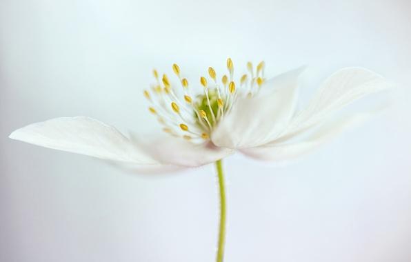 Picture flower, petals, stem, stamens