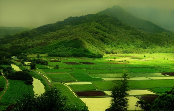 Picture greens, nature, green, hills