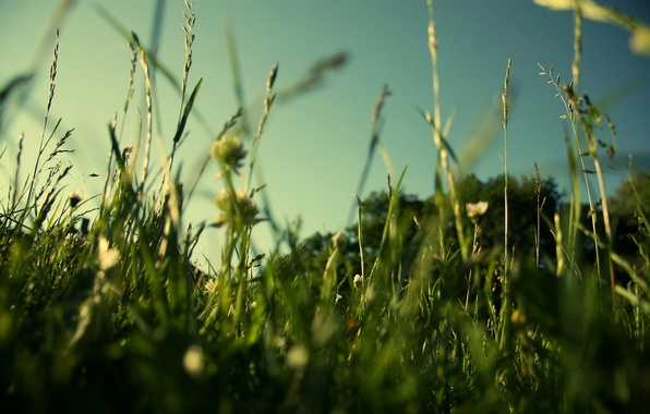 Picture greens, field, summer, grass, macro, nature, lawn