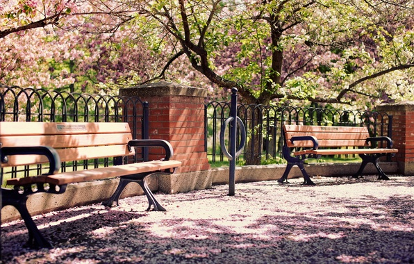 Picture the city, street, bench, cherry