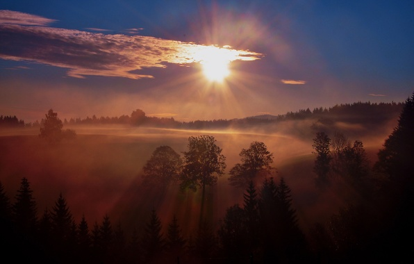 Picture forest, trees, fog, sunrise, morning
