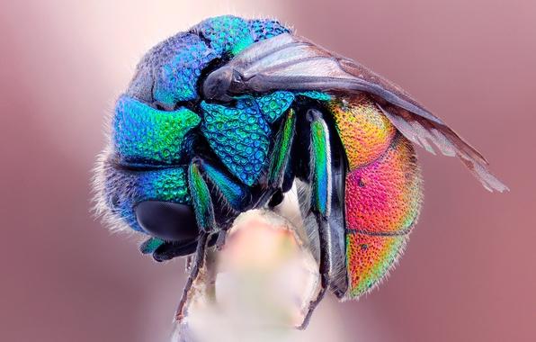 Picture macro, bee, fly, wet, rainbow, frozen