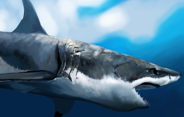 Picture shark, art, mouth, profile, under water, hunger