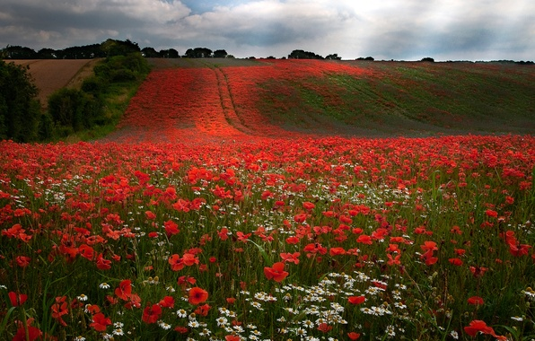 Picture field, the sky, clouds, trees, flowers, hills, Maki