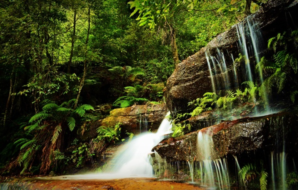 Picture greens, forest, grass, trees, rocks, waterfall