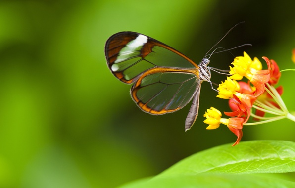 Picture flowers, butterfly, insect