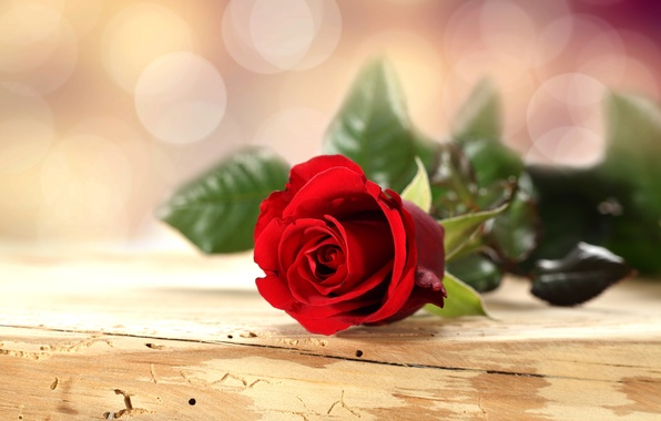 Picture flower, table, background, rose, petals, red, bokeh