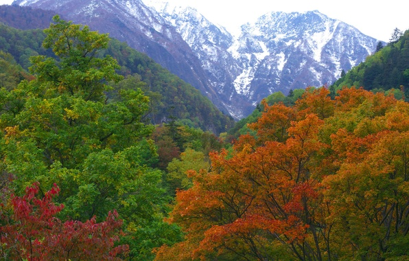 Picture autumn, forest, mountains, nature, Japan