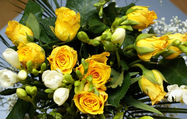 Picture flower, flowers, nature, roses, bouquet, yellow, yellow