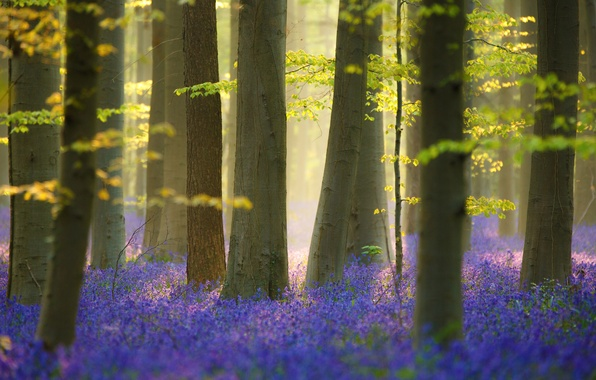 Picture forest, light, trees, flowers, nature, spring