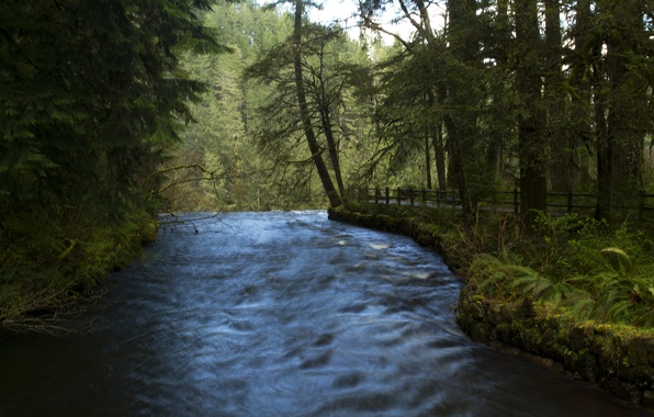 Picture forest, trees, river, for, waterfall, USA, path, Oregon, fence, Silver Falls State Park