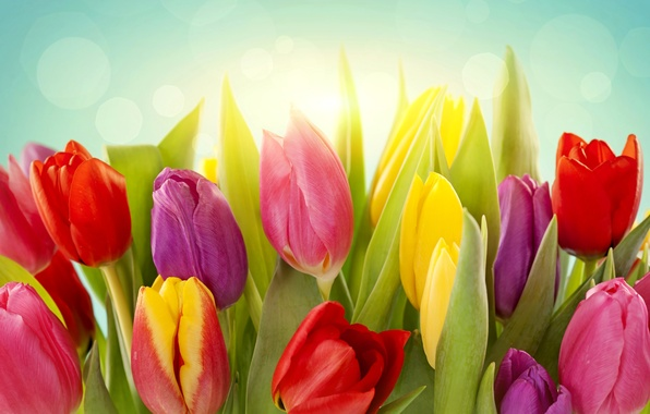 Picture leaves, light, flowers, spring, yellow, tulips, red, pink, buds